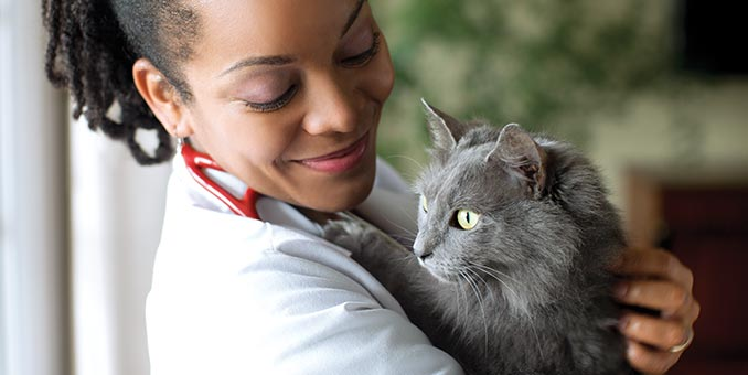 A veterinarian holds a gray cat.
