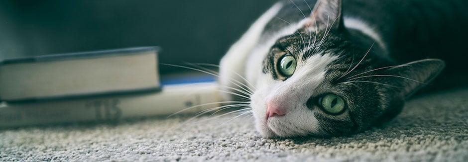 růžová kočička hd fotografie